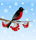 Branch with berry wild ash and bird bullfinch tree illustration Royalty Free Stock Image