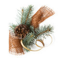 Branch of Blue Spruce Royalty Free Stock Image