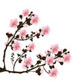 Branch of cherry flowers Royalty Free Stock Photo