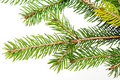 Branch of the Christmas tree Stock Photography