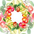 Branch with cornus mas berries. Green leaf. Watercolor background illustration set. Frame round. Royalty Free Stock Photo
