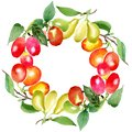 Branch with cornus mas berries. Watercolor background illustration set. Green leaf. Frame wreath. Royalty Free Stock Photo