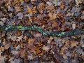 Branch covered with moss on a green meadow yellow autumn leaves Stock Photography