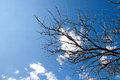 Branch of dead tree over blue sky with clouds Stock Photography