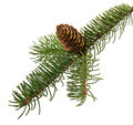 Branch  fir with cone Royalty Free Stock Photo
