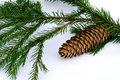 Branch fir-tree with pinecone Royalty Free Stock Photography