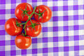 Branch five tomatoes Royalty Free Stock Photography