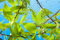 Branch with fresh spring leaves and sky Royalty Free Stock Photo
