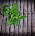 The branch is fresher than mint on a wooden background Royalty Free Stock Photos