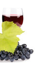 Branch of grapes and glass of wine Stock Image