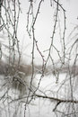 Branch in ice