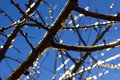 Branch with icicles on blue sky on sunny winter day Royalty Free Stock Photo