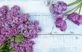 The branch of lilac blossoms with a bouquet of purple tulips on a light wooden background. Royalty Free Stock Photo