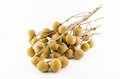 Branch of longan Stock Image