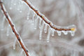 Branch with melting sleet ice Royalty Free Stock Photo