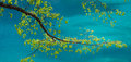 Branch over jiuzhaigou lake artistic capture of a tree the blue calcium of Royalty Free Stock Image