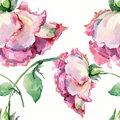 Branch pink roses , watercolor, pattern seamless Royalty Free Stock Photo