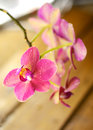 Branch red orchid flower on wooden background Stock Photo