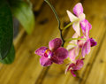 Branch red orchid flower on wooden background Stock Images
