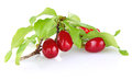 Branch of ripe cornelian cherry with leaves Royalty Free Stock Photo