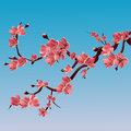 Branch of rose blossoming sakura . Japanese cherry tree. Vector Isolated Illustration Royalty Free Stock Photo
