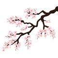 Branch of Sakura or Cherry Blossoms. Vector