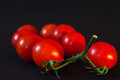 Branch of small red tomato on a black background. Royalty Free Stock Photo