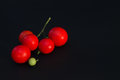 Branch of small red tomato closeup on a black background. Royalty Free Stock Photo