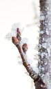 Branch with sprout covered in ice Stock Photography