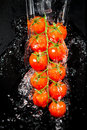 Branch of tomatoes Royalty Free Stock Image