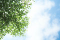 Branch tree and bluesky green Stock Image