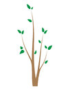 Branch of a tree with young leaves. Seedling on white. Isolated design element.