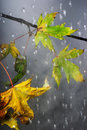 Branch under autumnal rain Royalty Free Stock Images