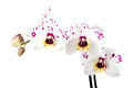 Branch of white orchid flower