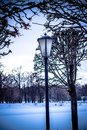 Branched trees in the park, sunset, winter Royalty Free Stock Photo
