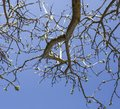 Branches against a blue sky, sunny day. Royalty Free Stock Photo