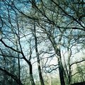 Trees nature forest branches Royalty Free Stock Photo