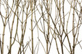 Branches Background Royalty Free Stock Images