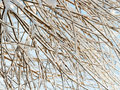Branches background Royalty Free Stock Photo