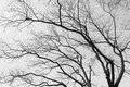 Branches background with white black style Stock Photo