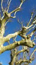 Branches and boughs Royalty Free Stock Photo