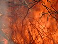 The branches in the burning pyre background of Stock Photos