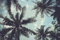 Branches of coconut palms under blue sky Royalty Free Stock Photo