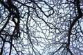 Branches covered with hoarfrost. Beautiful white winter.
