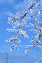 Branches covered with ice in sunlight blue sky after storm vertical toronto ontario canada Royalty Free Stock Images