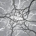 Branches dark Royalty Free Stock Image