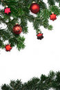 Branches of fir Stock Image