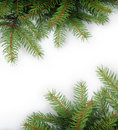 Branches of fir tree Stock Photo
