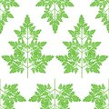 Branches of fresh parsley branches. Tasty and healthy spicy grass. Seasoning with meat and vegetable dishes. Vector illustration