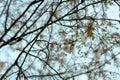 Branches full of flowers blossomed in spring, dreamlike landscape
